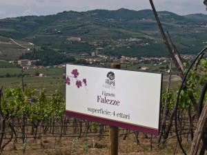 Azienda Agricola Falezze