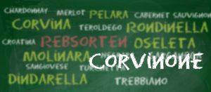Die Rebsorten des Valpolicella: Corvinone
