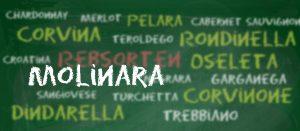 Rebsorte Molinara