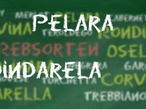 Rebsorte Dindarella/Pelara